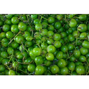 Glue Berry(LASODA)