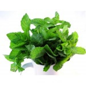 MINT LEAVES(PUDINA)